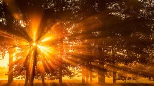 Wie das Licht seinen Weg in die Köpfe findet