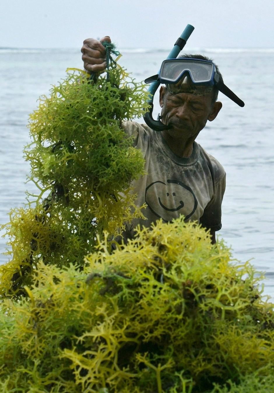 Seegrasernte auf Bali