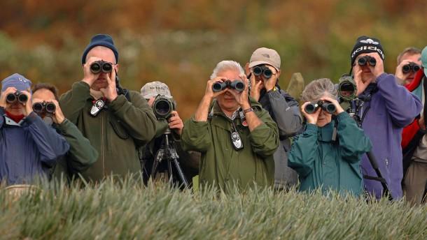Teil 4: Birdwatching in Großbritannien