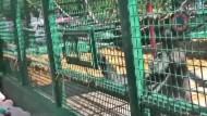 Gorilladame wirbt um Helfer bei der Futterbeschaffung