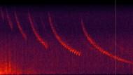 Spektrogrammvideo desKlanges der Bartrobbe in der Norwegischen Arktis