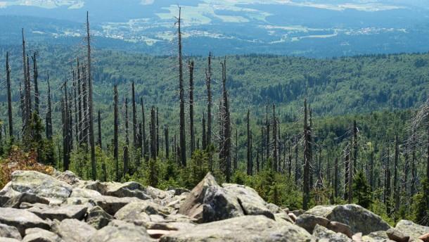 Der Wald ist doch noch nicht tot