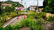 Das Dorf Futuba, unmittelbar in der Nähe der Reaktoranlage gelegen, wurde evakuiert. Tiere und Pflanzen müssen mit der Radioaktivität allein fertig werden.