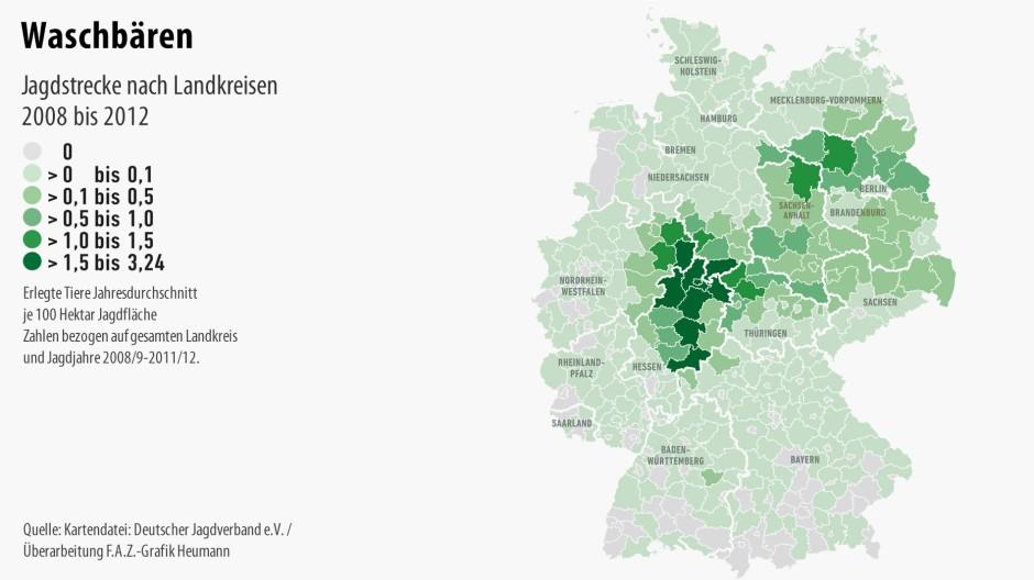 Nordhessen ist das deutsche Waschbärenzentrum. Aber mittlerweile gibt es sie fast überall.