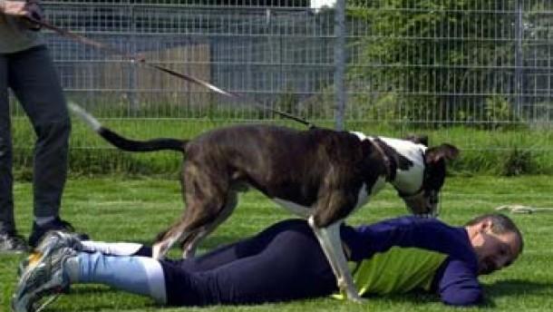 Der Mensch im Hund will doch nur laufen