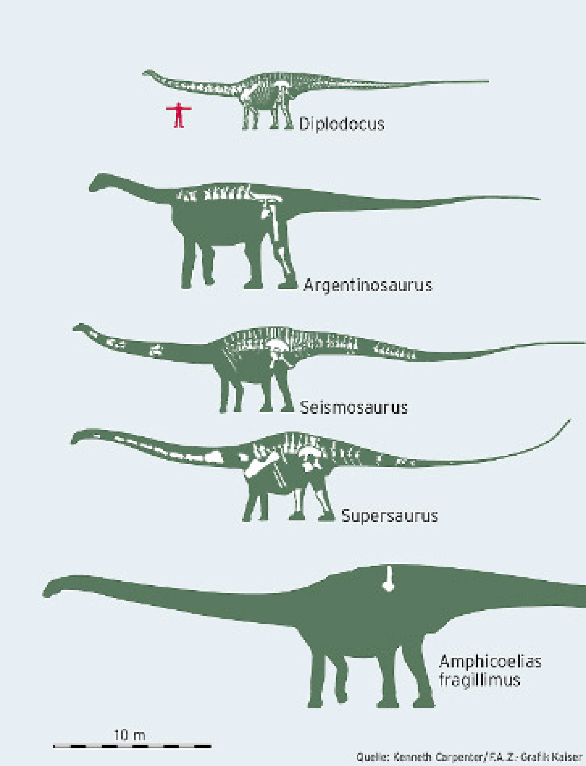Der größte dinosaurier aller zeiten