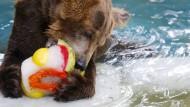 Eis für Zoo-Tiere in Rio