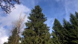 Ein Weihnachtsbaum für den Römer