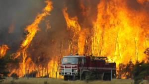 Mindestens 84 Tote bei verheerenden Waldbränden
