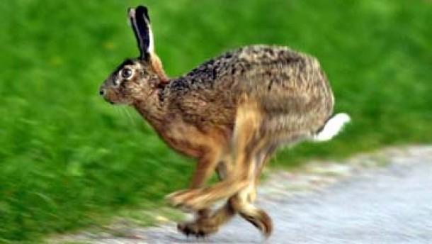 Tierärzte der Hasenpest auf der Spur - mehrere Menschen infiziert
