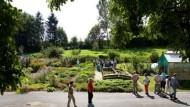 Thymian und Sauerampfer: der Kräutergarten Kloster Engelthals
