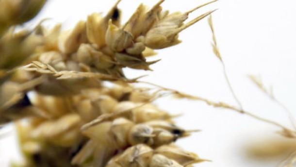 Weizen so teuer wie seit elf Jahren nicht mehr