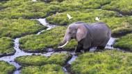Gnadenlose Jagd auf Elefanten