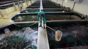 Der Millionenschwindel mit dem Kaviar