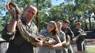 Monströser Python in Australien vermessen
