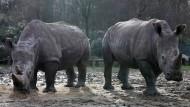 Wilderer töten Nashorn in Zoo und klauen Horn