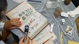 Das rätselhafte Voynich-Manuskript
