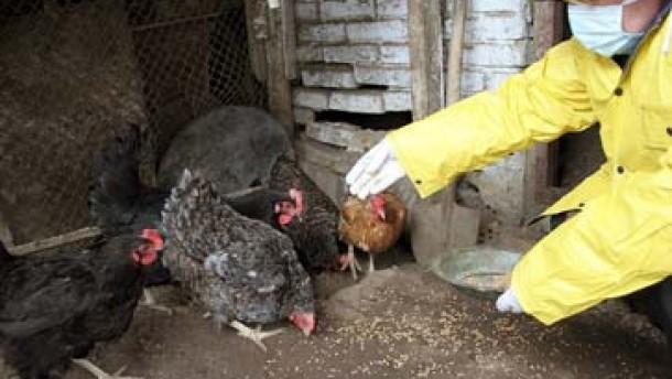 Nährboden der Vogelgrippe