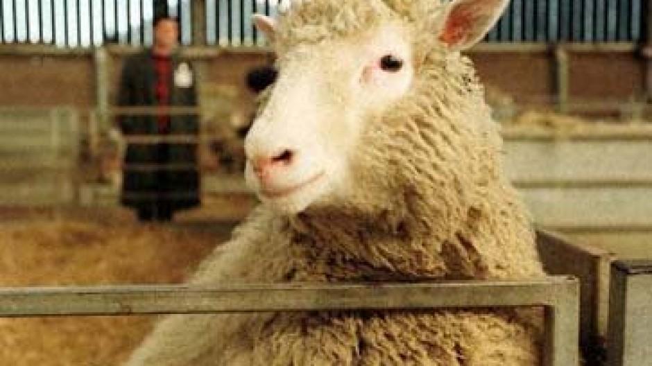 """Das erste Klonschaf wurde nach Dolly Parton """"Dolly"""" genannt"""