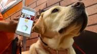 App versteht Hunde und Katzen