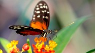 Erstes Schmetterlingsreservat auf Kuba eröffnet