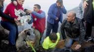 Feuerwehr rettet Hundebabys aus Feuer