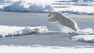 Was Menschen weltweit über den Klimaschutz denken