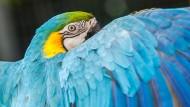 Monty Python und der blaue Papagei
