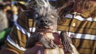 Hässlichster Hund der Welt gekürt
