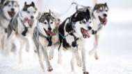 Mit den Schlittenhunden über die Alpen