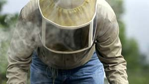 Rätselhaftes Bienensterben