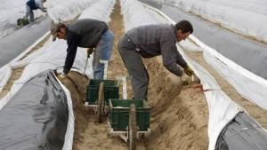 Krise heißt in Polen zurück auf den Kartoffelacker