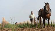 Ein Winzer zu Pferde