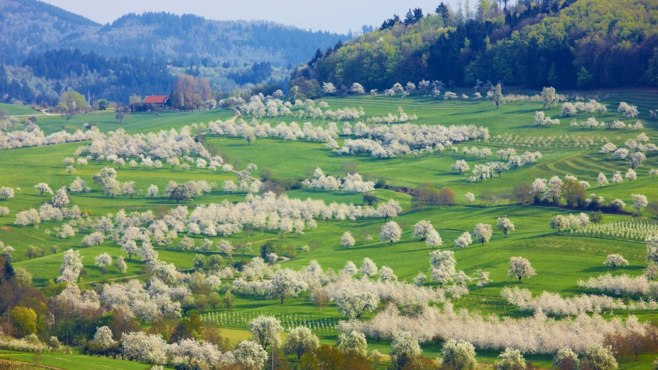 Die schönsten Ecken des Schwarzwalds