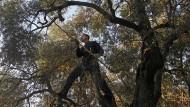 Griechische Landwirte kämpfen ums Überleben