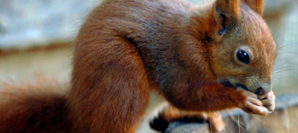 Eichhörnchen im Gesicht Helle Analporno-Videos