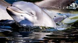 Delfine begleiten Kajakfahrer