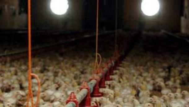 Roche will die Vogelgrippe nicht ausnutzen
