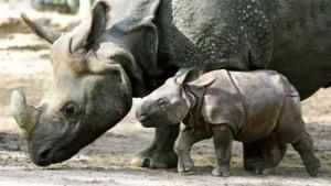 Retorten-Embryo vom Nashorn