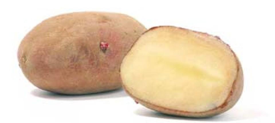 Kartoffeln Neue Knollen Natur Faz