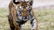 Können bengalische Tiger und Delfine noch gerettet werden?