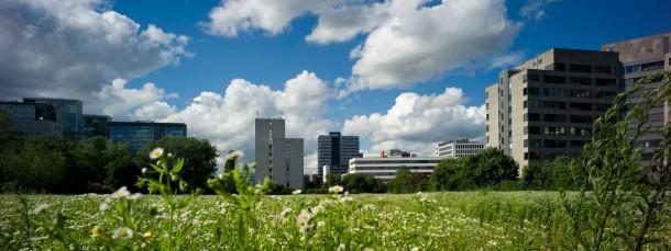 Wachstumspotential: Brachfläche in der Bürostadt Niederrad.