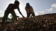 Kakobauern werden für den Klimaschutz vertrieben