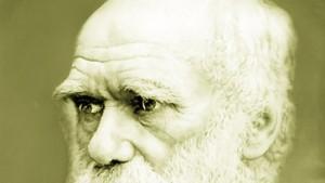 Darwins Schnabeltier