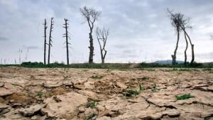Wasserschau im Dürreland