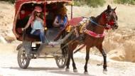 Pferde-Qual in Petra soll Ende haben