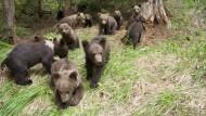 Neues Leben für gequälte Braunbären
