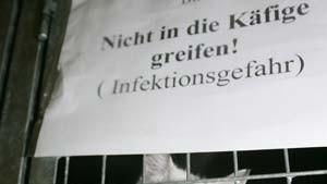 Rügen: Streunende Haustiere sollen eingefangen werden