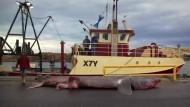 Fischer fangen 3500 Kilo schweren Riesenhai