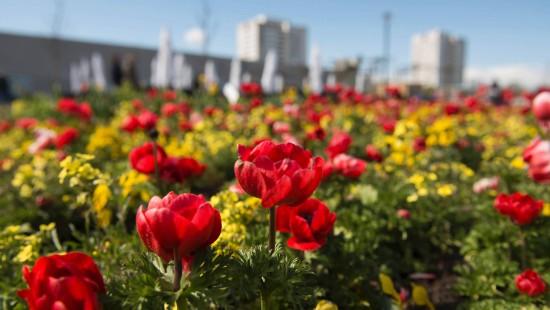 Ein Garten für Berlin und die Welt